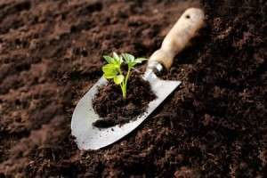 Growing-team-garden-analogy