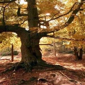 old-tree_00098325